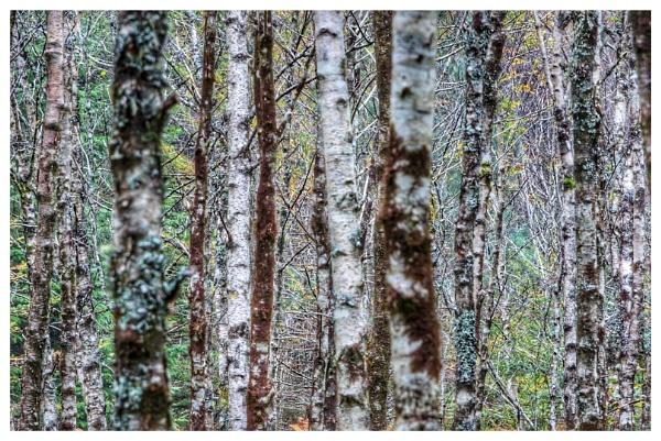 Wood by Stevetheroofer