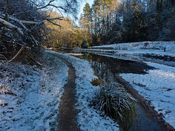 Sunnyhurst Woods 412