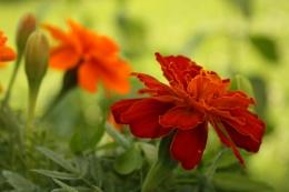 Flower Land 1