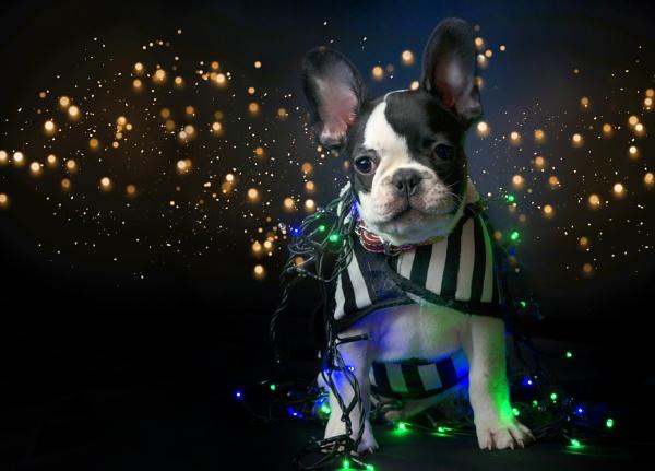 Puppy present by tutye