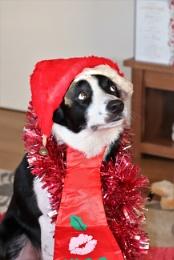 Christmas Charlie.