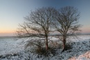 trees! by alfpics