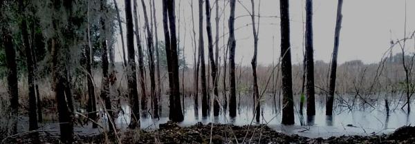 cold swamp 1 by Nesto
