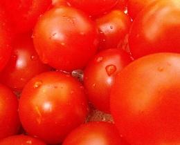 Photo : Tomatoes