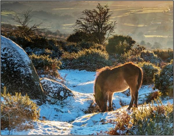 Bonehill Pony