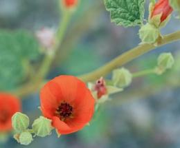 Spring Bloom in Death Valley