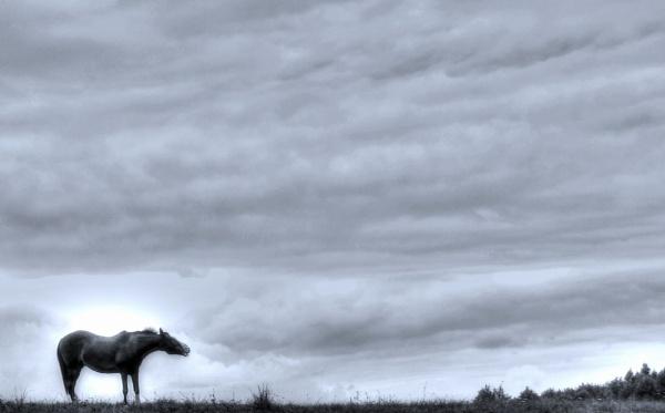 Horse B&W