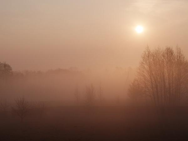Pink fog by Algimantas