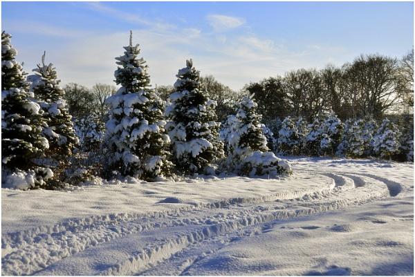 Snow scene by dven