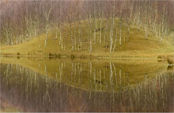 Clova Birches by MalcolmM