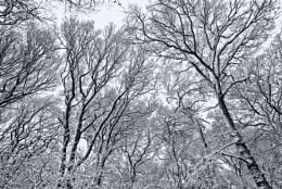 The Bleak Mid Winter