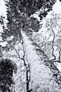 Bleak Mid Winter II by Stephen_B