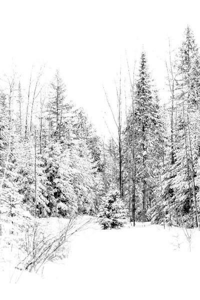 Let it Snow by Joline