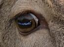 Eye effect. by paulbroad