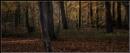 Autumn woods by Dwaller