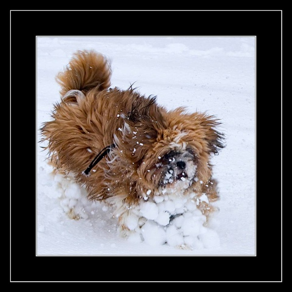 George\'s First Snow by r0nn1e