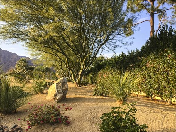 Desert Garden by Daisymaye