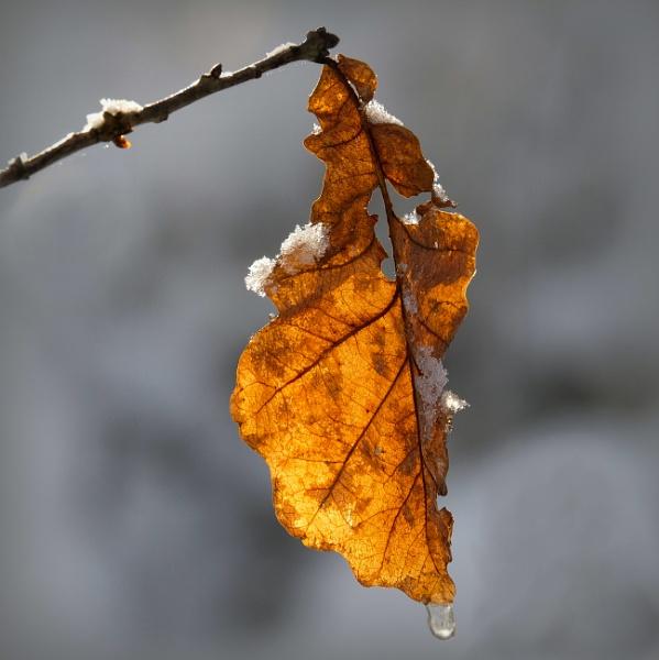 leaf IX by optik