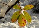 Leaf XI by optik