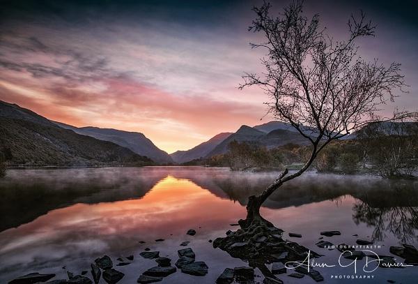 That lone tree again... by Tynnwrlluniau