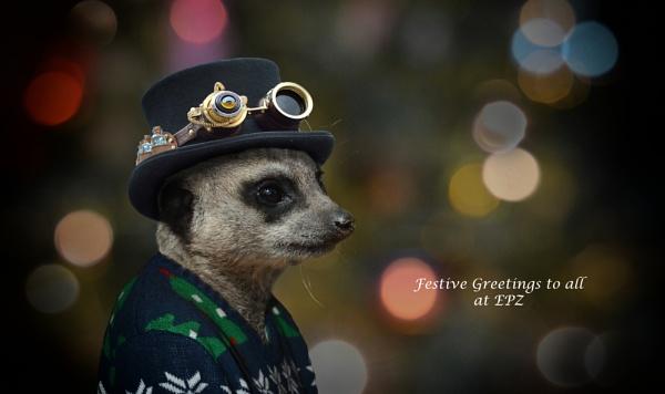 Festive Greetings by tonyng