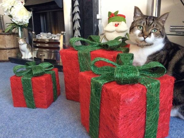Merry Christmas by darrenwilson41