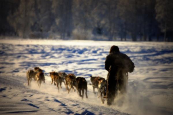 The Race by Rebeak
