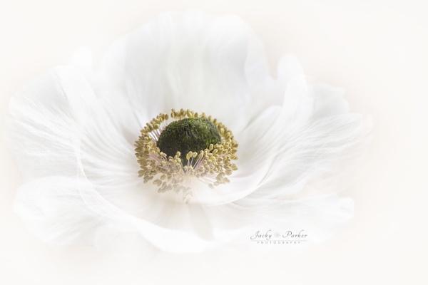 Festive White by jackyp