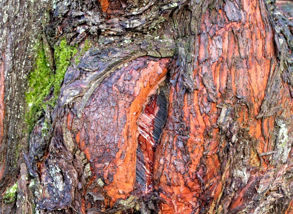 Tree bark by Danny1970