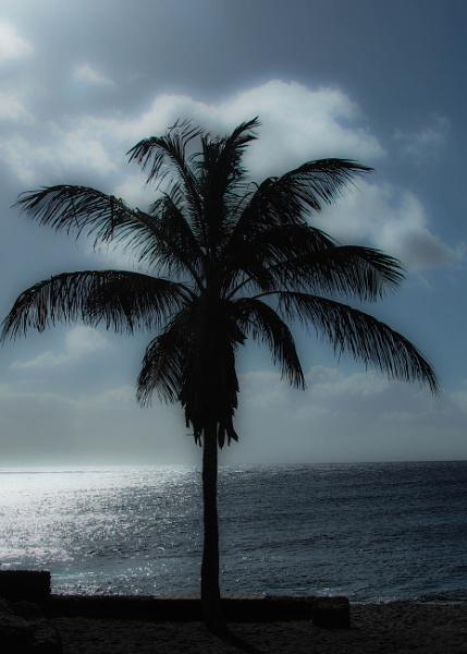Palm Tree by DaveRyder