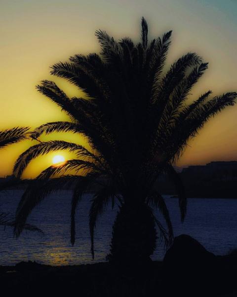 Sunset Palm by DaveRyder