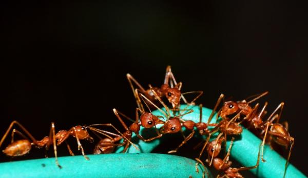 Ant\'s meeting by kingmukherjee