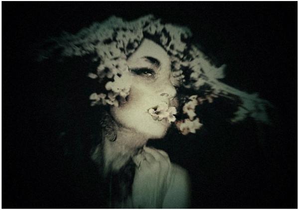 sakura by lostrita