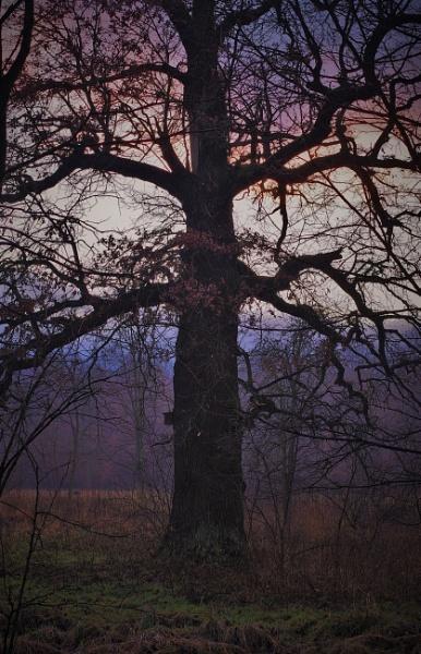 FOREST - Sunset Oak by PentaxBro