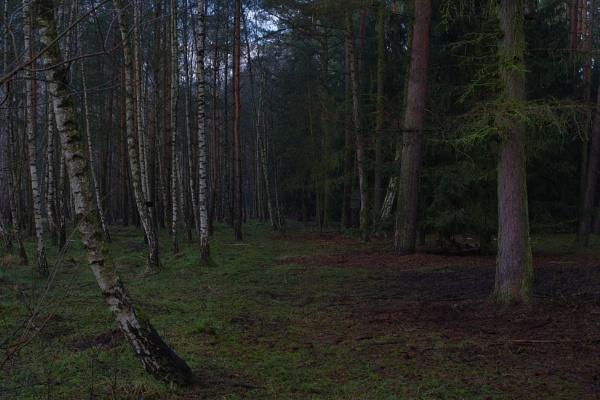 FOREST - Secret Path by PentaxBro