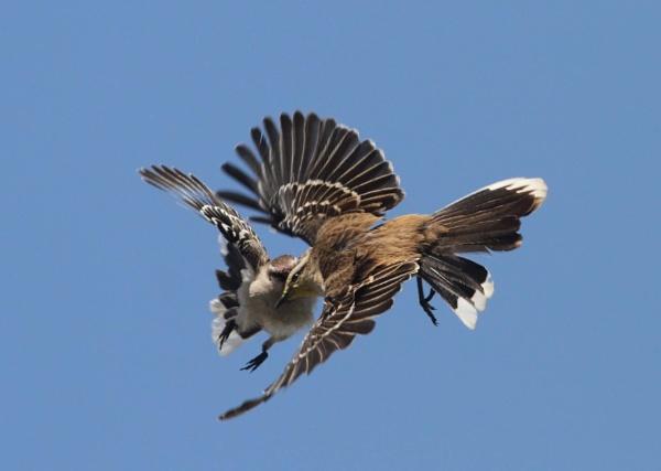 Bird by Pieterjt007