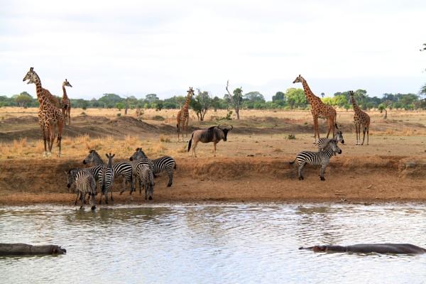 Mikumi Wild life Park Tanzania by ranjit1945