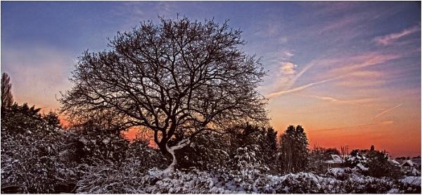 Winter Tree by dven