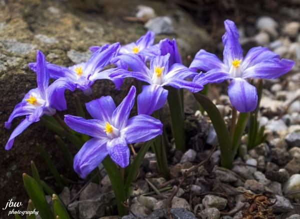Spring by Jodyw17