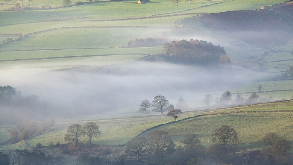 Trees in the Mist by martinl