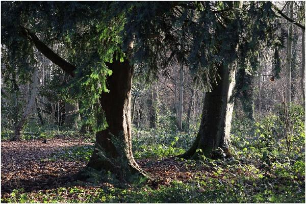 Astley Woods by johnriley1uk