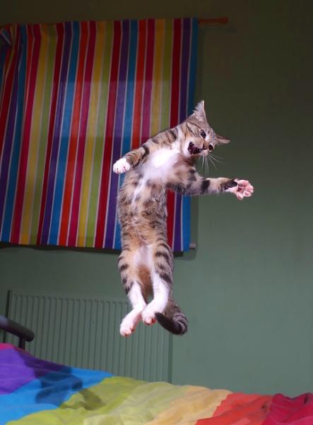 Happy kitten by turniptowers