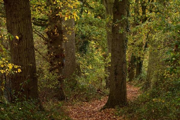 Woodland Walk by jander01
