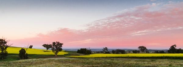 Frosty Canola, Morongola, New South Wales  by BobinAus