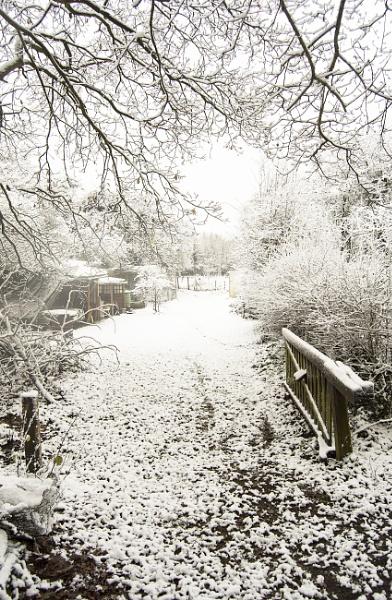 Snow in the garden by Fionna