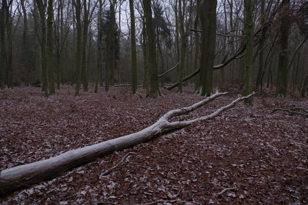 FOREST - Frosty Fork Tree by PentaxBro