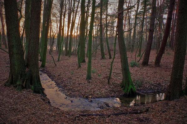 FOREST - STREAMLINED SUNSET III by PentaxBro