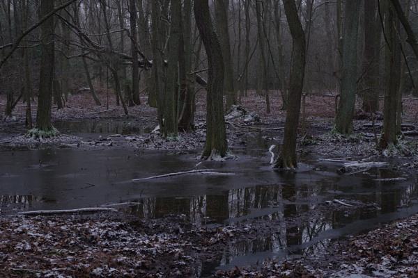 FOREST - Frozen Reflections II by PentaxBro