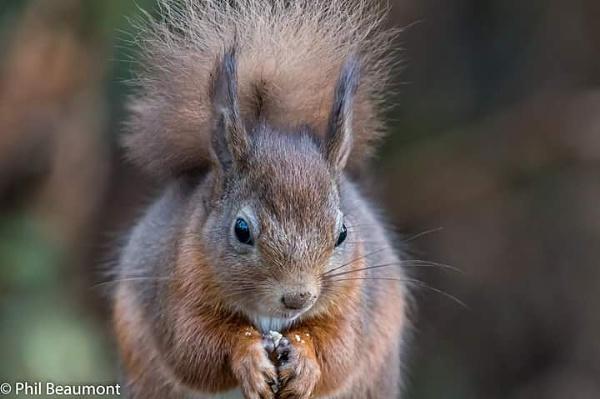 Squirrel 3 by PBeaumont