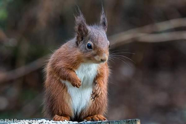 Squirrel 4 by PBeaumont